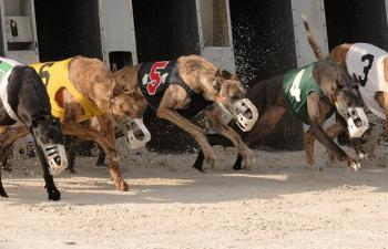 Corridas de Galgo Palm Beach & Orange Park 14/06 Domingo